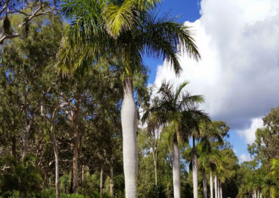Moretons-Horticulture-Gold-Coast-Commercial-Landscaping-Design-and-Project-Management