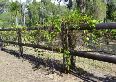 Moretons-Horticulture-Gold-Coast-Residential-Fencing_1