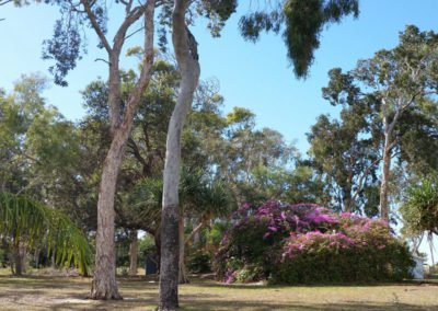 Moretons-Horticulture-Gold-Coast-Residential-Privacy-Screening-with-Shrubs