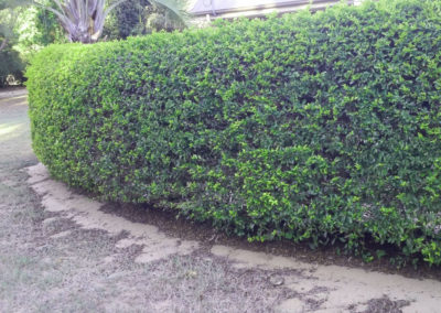 Moretons-Horticulture-Gold-Coast-Residential-and-Commercial-Landscaping-Garden-Hedge